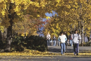 Fall path with students
