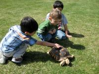 Image of youngsters looking at tortoise, Arborfest, 2009