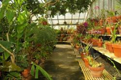 Image of CWU Greenhouse, room 4.