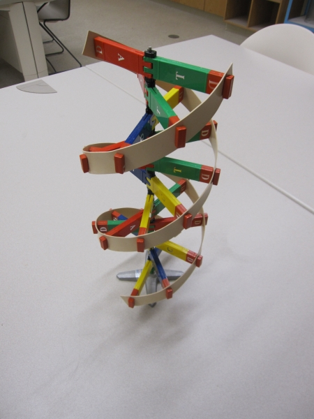 Photo of DNA Model