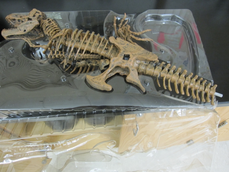 Photo of a T Rex skeleton model
