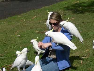 Family member surrounded by cockatoos