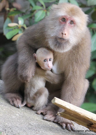 Primate behavior research