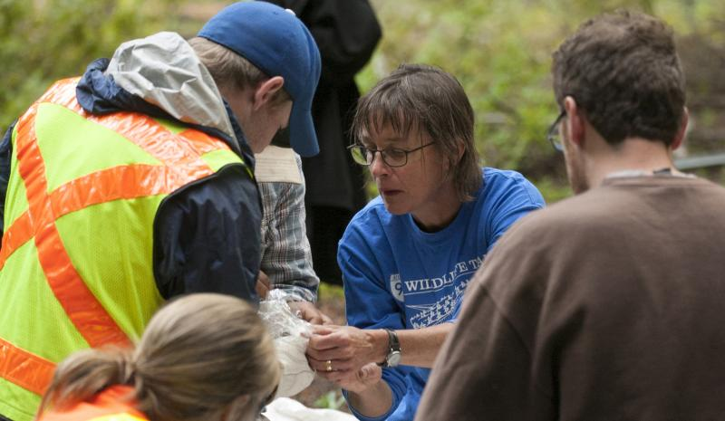 CWU biology professor Kris Ernest and her small mammal team work near Snoqualmie Pass.